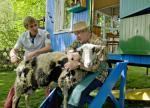 Schafe – Ausreißer im Wollpelz (Staffel 28, Folge 3) – © KI.KA