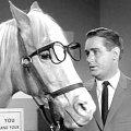 """Mr. Ed""-Star Alan Young im Alter von 96 Jahren verstorben – Jahrzehntelang die Originalstimme von Dagobert Duck – © YouTube/Screenshot"