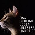 """VOX erforscht """"Das geheime Leben unserer Haustiere"""" – Neue Tierdokureihe am Samstagvorabend – © TVNOW"""