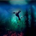 """""""Der Blaue Planet"""": Aufwendige BBC/WDR-Meeresdoku ab Februar im Ersten – Mega-Projekt von James Honeyborne mit Musik von Hans Zimmer – Bild: WDR/BBC/Lisa Labinjoh/Joe Platko"""