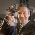 """""""Terra X"""": Neue """"Supertiere""""-Staffel und Zeitreise durch Deutschland – Zweiteiler für September und Jahresende angekündigt – © obs/ZDF"""