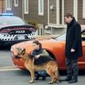 """""""Hudson & Rex"""": TNT Serie zeigt kanadische """"Kommissar Rex""""-Adaption – Mensch-Hund-Team folgt ab November der Fährte – Bild: TNT Serie/Shaftsbury/Pope Productions"""