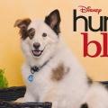 """""""Hund mit Blog"""": Disney Channel zeigt dritte Staffel ab Mitte Juni – Neue Folgen als deutsche TV-Premiere – © Disney Channel"""