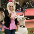 """Neue Tier-Talentshow: RTL II wird """"Oberaffengeil!"""" – Katzenberger, Zietlow und Tall in der Jury – Bild: RTL II"""