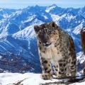 """Sir David Attenborough moderiert """"Planet Earth II"""" – Ko-Produktion von BBC und ZDF auf der Zielgeraden – © BBC"""