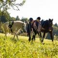 """""""Tiere bis unters Dach"""": ARD zeigt fünfte Staffel geballt an Pfingsten – Sechs neue Folgen innerhalb von zwei Tagen – Bild: SWR/Maria Wiesler"""