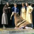 """ZDFkultur wiederholt """"Unsere Hagenbecks"""" – Alle drei Staffeln der 90er-Jahre-Serie ab Dezember – Bild: ZDF"""