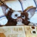 """Warner plant """"Gremlins""""-Rückkehr als Animationsserie – Prequel würde sich um jungen Mr. Wing drehen – Bild: Warner Bros."""