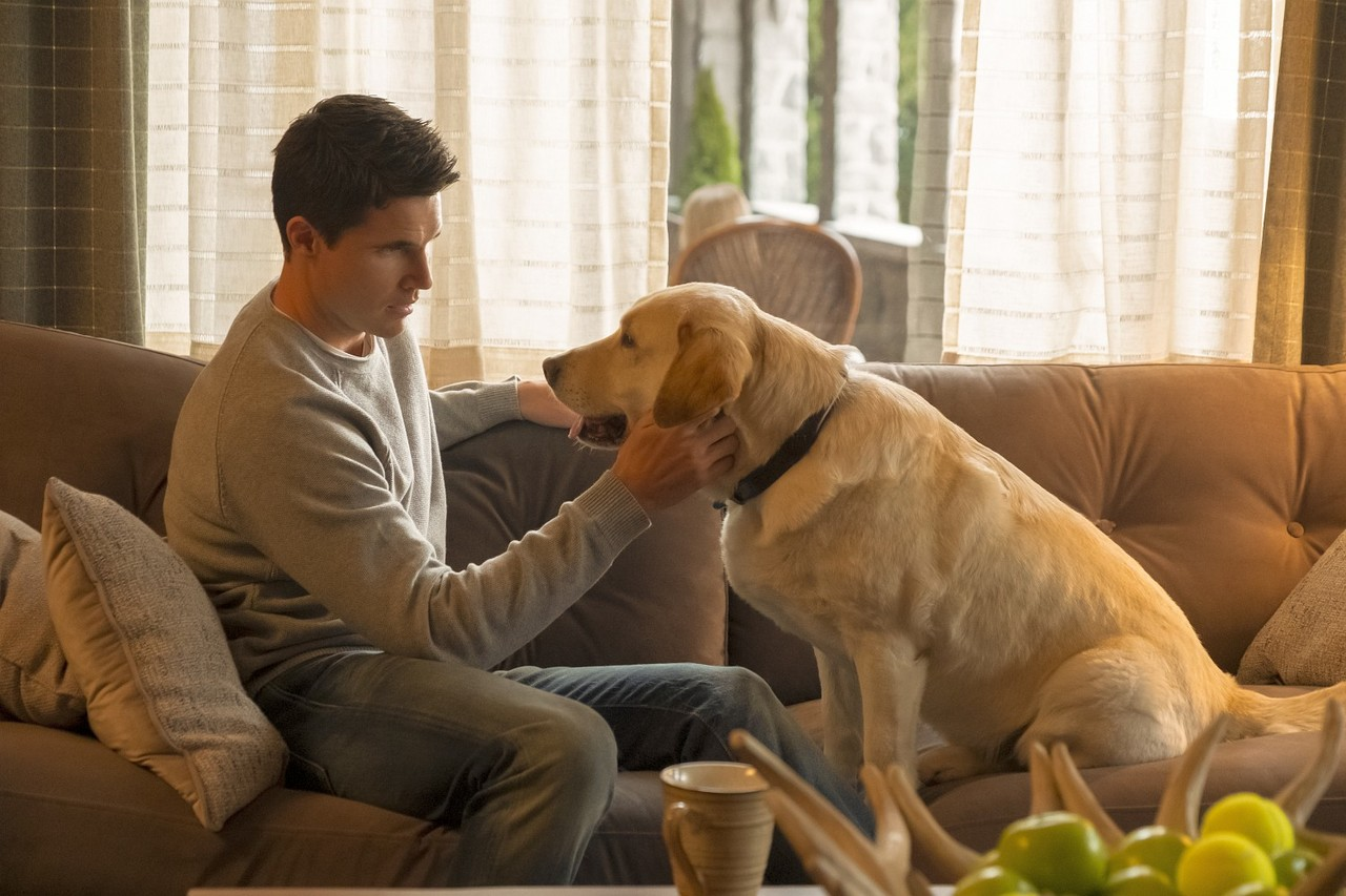 """Nathan (Robbie Amell) und sein """"Therapiehund"""" äh Therapeut. Katie Yu/Prime Video"""