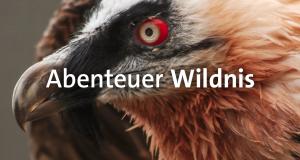 Abenteuer Wildnis – Bild: BR Fernsehen