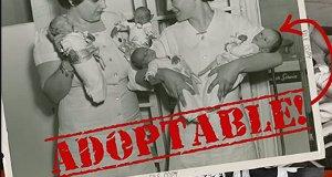 Adoptable – Bild: ScoLo