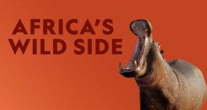 Afrikas wilde Tierwelt – Bild: National Geographic