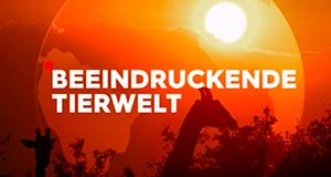 Beeindruckende Tierwelt – Bild: ZDF/ORF/PBS