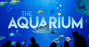 Das Atlanta-Aquarium – Bild: Animal Planet