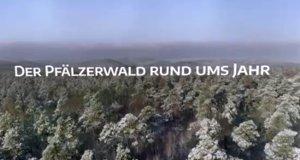 Der Pfälzerwald rund ums Jahr