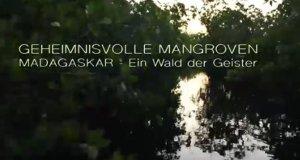 Geheimnisvolle Mangroven – Bild: arte/Mona Lisa Productions