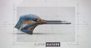 Superkräfte der Natur – Bild: Planète+/TV Only