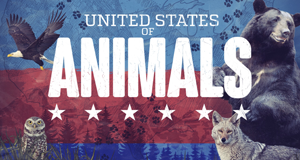 United States of Animals – Bild: Nat Geo Wild