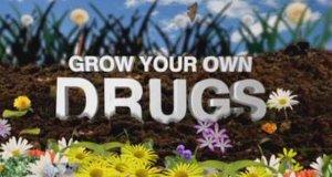 Heilpflanzen – Wellness aus dem eigenen Garten