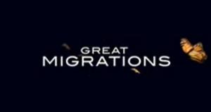 Great Migrations – Das große Wunder der Tierwanderungen – Bild: National Geographic Channel