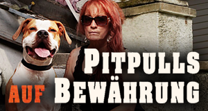 Pitbulls auf Bewährung – Bild: Discovery Communications, LLC./TLC