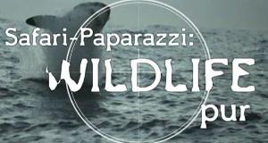 Wildtiere vor der Kamera – Bild: n-tv