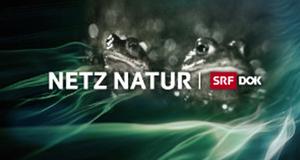Netz Natur – Bild: SRF