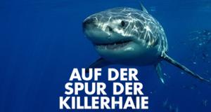 Auf der Spur der Killerhaie – Bild: National Geographic Channel