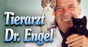 Tierarzt Dr. Engel – Bild: ZDF / Universum Film GmbH