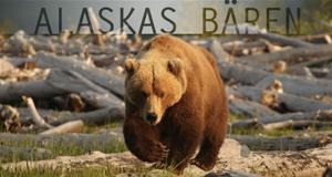 Alaskas Bären – Bild: PBS