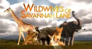 Desperate Wildwives – Bild: Animal Planet
