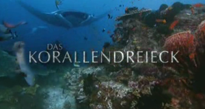 Das Korallendreieck – Bild: ZDF/©Ron Taylor