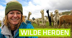 Wilde Herden – Bild: BBC