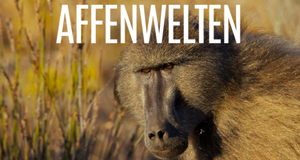 Affenwelten – Bild: BBC/Giles Badger