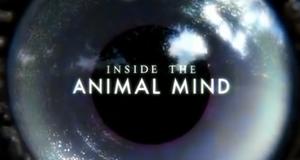 Einfach clever: Wie Tiere denken – Bild: BBC Two/Screenshot
