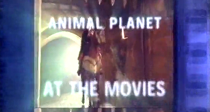 Kinostars – Bild: Animal Planet/Screenshot