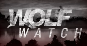 Wolf Watch – Bild: MTV/Screenshot