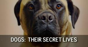 Die geheime Welt der Hunde – Bild: Channel 4/Screenshot