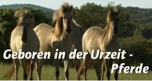 Pferde: Geboren in der Urzeit – Bild: BR