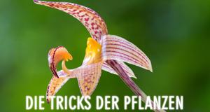 Die Tricks der Pflanzen – Bild: Terra Mater / Parthenon Entertainment / Steve Nicholls