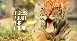 Giles und die Tigerkinder – Bild: BBC Two/Screenshot