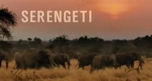 Serengeti – Bild: NDR