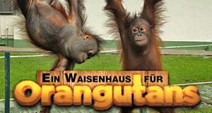Ein Waisenhaus für Orang-Utans – Bild: DCI