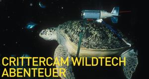 Crittercam WildTech Abenteuer – Bild: NGC Europe Limited