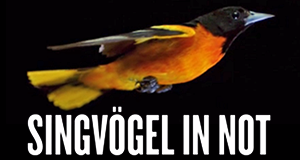 Singvögel in Not – Bild: arte