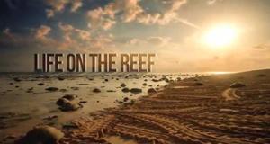 Lebensraum Riff – Bild: ABC Australia/Screenshot