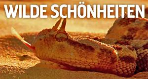 Wilde Schönheiten – Bild: Discovery Networks International