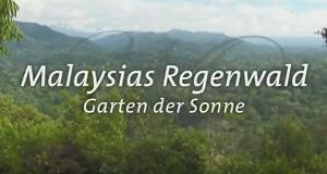 Malaysias Regenwald – Bild: BR