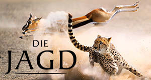 Die Jagd – Auf Leben und Tod – Bild: Silverback Films/BBC/polyband