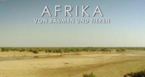 Afrika – Von Bäumen und Tieren